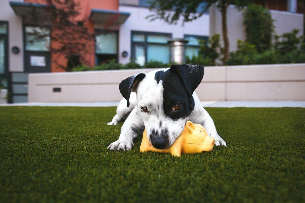 gazon-synthetique-urine-chien